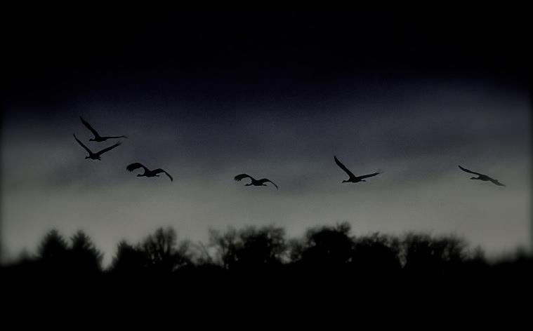 Tranor i natten