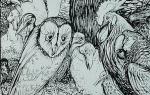 rackham owl