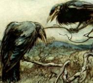 corbies